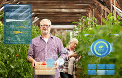 Old couple with box of tomatoes at farm greenhouse. Organic farming, gardening and people concept - senior women and men with box of tomatoes at greenhouse on Royalty Free Stock Photo