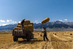 Old couple collecting haystack after harvest