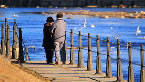 Old couple feeding the birds. Old couple in Cluj-Napoca, Romania, feeding birds on the somes river Royalty Free Stock Image