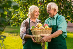 Old couple holding apple basket. People looking at each other. The fruit garden Royalty Free Stock Photography