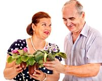 Old couple holding flower. Stock Photo