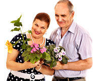 Old couple holding flower. Stock Photos