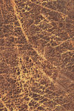 Old Cowhide Grunge Texture Royalty Free Stock Photo