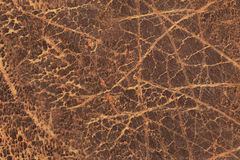 Old Brown Cowhide Crumpled Wizened Exfoliated Flaky Coarse Grunge Texture Stock Images