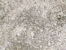Old crack gray cement floor with green lichen royalty free stock photo