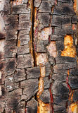 Old cracked bark of birch Royalty Free Stock Photos