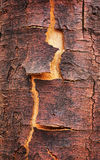Old cracked birch bark Stock Photos