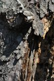 Old cracked chestnut tree trunk texture, brown blurry vertical background, close up. Detail stock photos