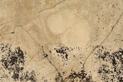 Old, cracked concrete surface Stock Images