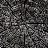 Old cracked cut logs with annual rings Royalty Free Stock Images