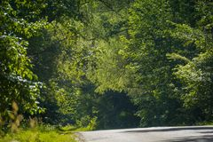 Sunny Cracked Rural Road. Old cracked, damaged asphalt road in countryside at sunny day Royalty Free Stock Image