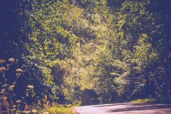 Sunny Cracked Rural Road Filtered. Old cracked, damaged asphalt road in countryside at sunny day, vintage background Stock Photos