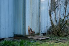 House with old siding damaged from weather and pests. Old cracked discolored siding on house in need or repair stock image