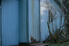 Pest and weather damage on small blue chiminey. Old cracked discolored siding on house in need or repair royalty free stock photography
