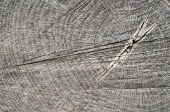 Old cracked gray stump closeup Stock Images