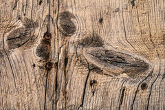 Old Cracked Knotted Plank With Rusty Phillips Screws Embedded. Old, weathered, rotten plank, with wood knots, lateral curved cracks and embedded rusty phillips Royalty Free Stock Photo