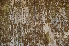 Old cracked paint on wood wall Royalty Free Stock Photography