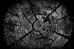 Old tree stump royalty free stock images