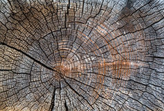 Old cracked stump Stock Photography