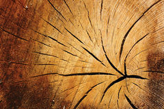 Old cracked timber Stock Photography