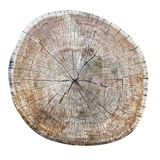 Old weathered cracked tree trunk cross section. royalty free stock images