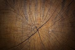 Old, cracked tree trunk cross section wood background texture. stock photo