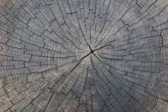 Old cracked tree trunk cross section wood background. royalty free stock image