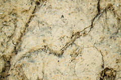 Old Cracked Wall Texture with Adobe and Dry Straw.  royalty free stock photo