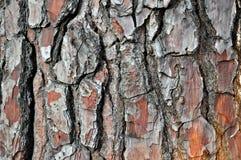 Old cracked wood bark texture Stock Photo