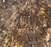 Old cracked wood Royalty Free Stock Image