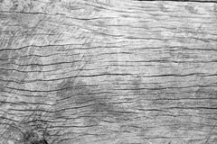 Old cracked wood grain texture Royalty Free Stock Image