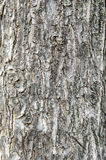 Old cracked wood grain texture background Royalty Free Stock Photo