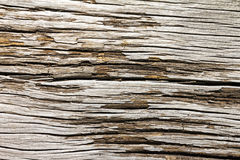 Old Cracked Wood Texture Stock Image