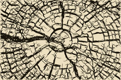 Old cracked wooden stump texture Stock Image