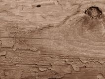 Old crecked wooden Board eaten by worms and beetles in sepia colour. Horizontal crecks on wooden board. Suitable for rustic retro style background. Space for royalty free stock photo