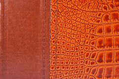 Old crocodile leather texture Stock Photos