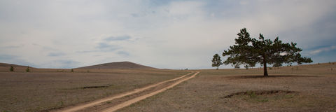 Old, crooked lonely tree and road Stock Images