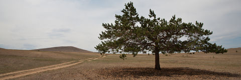 Old, crooked lonely tree and road Stock Image