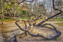 Old crooked tree Stock Image