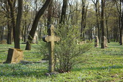 Old cross on abandoned cemetery. Old cross on abandoned Pokrov cemetery in Riga, Latvia Royalty Free Stock Photos
