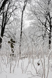 Old cross in winter forest Royalty Free Stock Photos