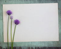 Old crumpled paper with purple flowers on grunge background Stock Photography