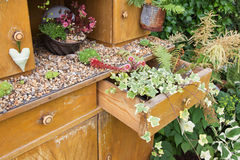 Old cupboard with flowers growing inside it Stock Image