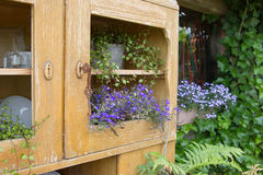 Old cupboard with flowers growing inside it Stock Photography