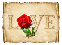 Old curly paper with red rose , space for text or images Stock Photography