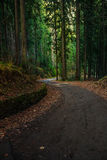 Old curve road through forest Royalty Free Stock Photos