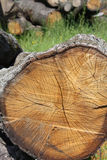 Old cut oak Stock Photos