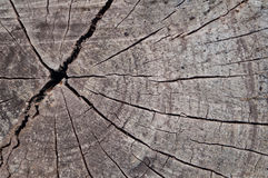 Old cut tree trunk. Textured royalty free stock photo