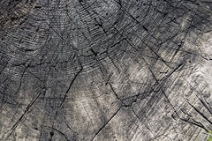 A old cut of the tree trunk with annual rings. Stock Photos