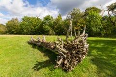 Old cut tree on a meadow in Keswick, Cumbria, UK. Old cut tree viewed from roots side on a meadow in Keswick, Cumbria, UK Stock Images